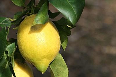 poulet-roti-citron-L-1
