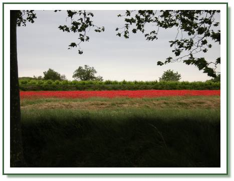 canal-coquelicots
