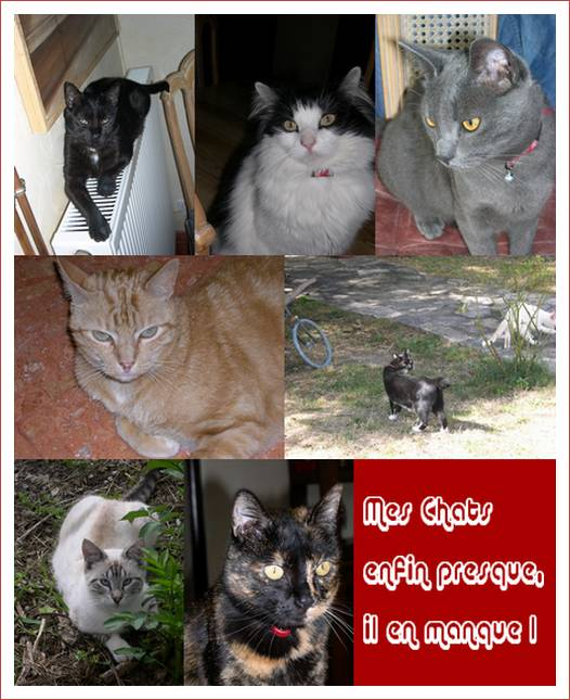 mes-chats