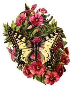 240810-papillon