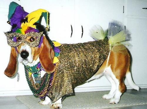 chien-carnaval