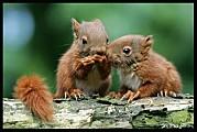2-ecureuils.jpg