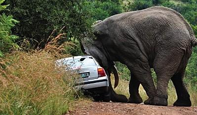 éléphant 4