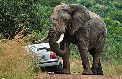 éléphant 5