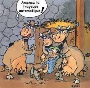 humour-vache