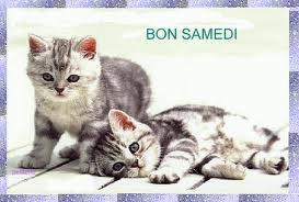 Bon samedi chats