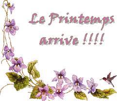 Bonjour violettes printemps