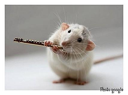 souris-musicienne