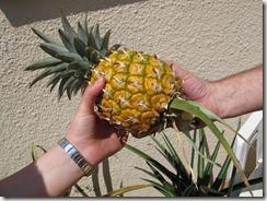 Ananas-B.jpg