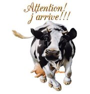 Attention vache
