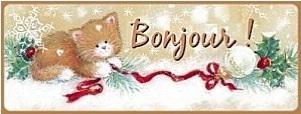 Chat NOël Bonjour