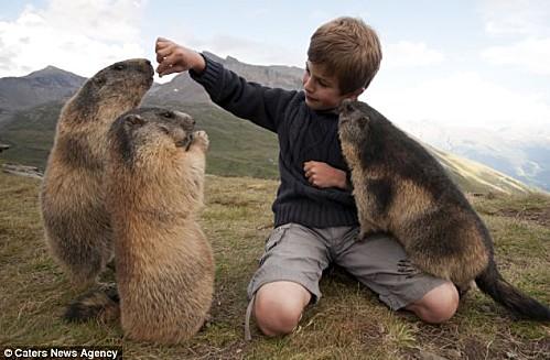 L-enfant-et-les-marmottes-4.jpg