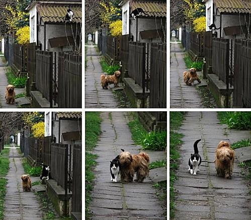 Chat-chien-amitie.jpg